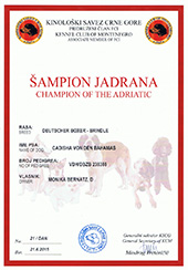 Champion-of-Adriatic