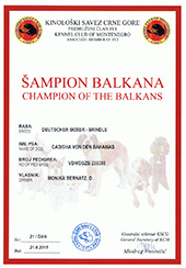 Champion-of-Balkan
